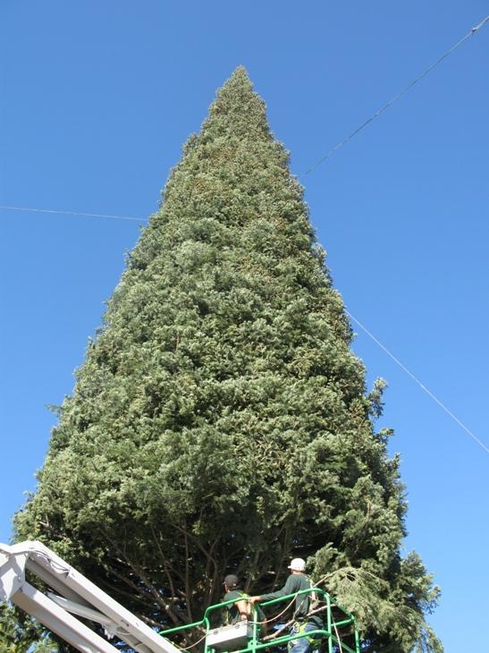 Annual Christmas Tree Lighting at Fashion Island