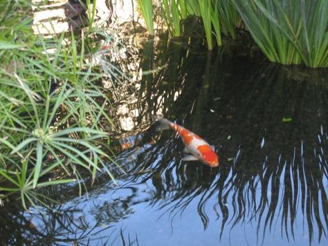 Fashion Island Koi Pond