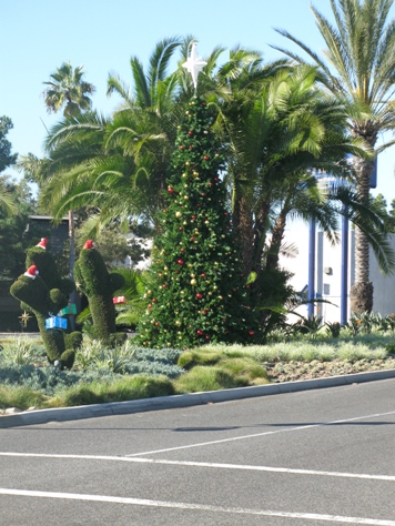 Corona del Mar Christmas Tree