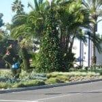 Corona del Mar Christmas Walk | Holiday Festivities in Corona del Mar