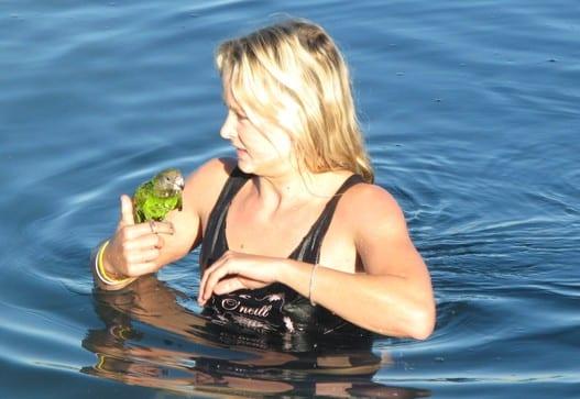 b-bird in newport shores