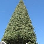 Annual Christmas Tree Lighting at Fashion Island in Newport Beach