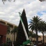 Fashion Island Christmas Tree Decorating Continuiing