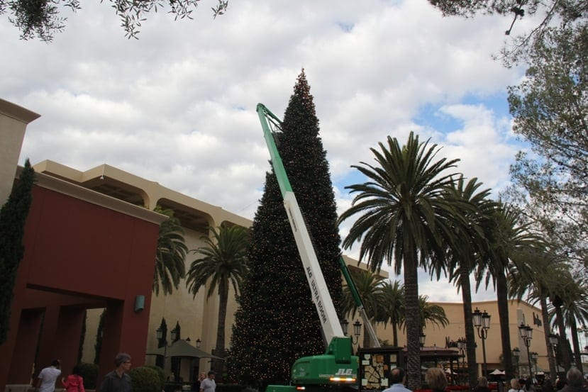 California Christmas Tree Association