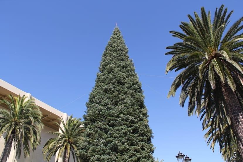 Fashion Island Christmas Tree Arrives In Newport Beach Newport Beach Ca Real Estate Homes For Sale