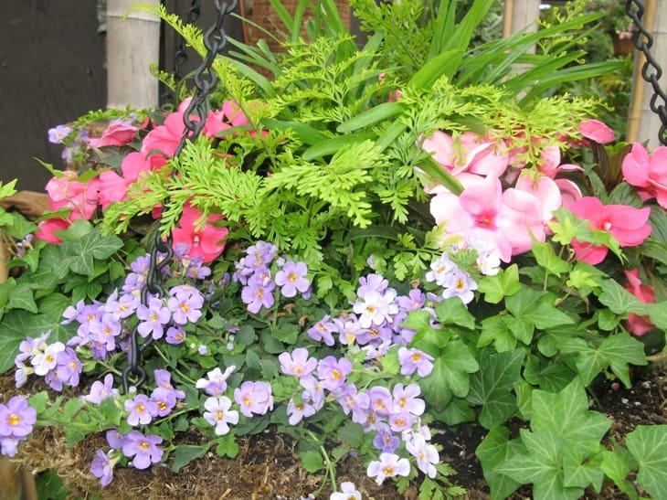 Newport beach gardens