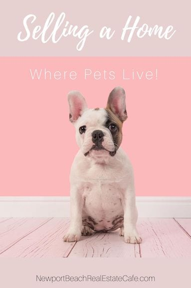 Selling a Home Where Pets Live