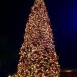 Fashion Island Tree Lighting 2017