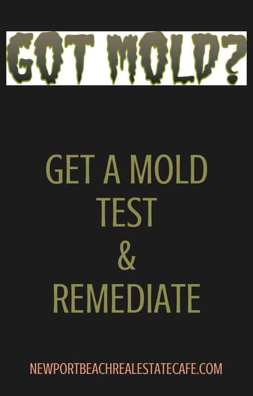 Selling a Home Where Mold Grows | What You Need to Know