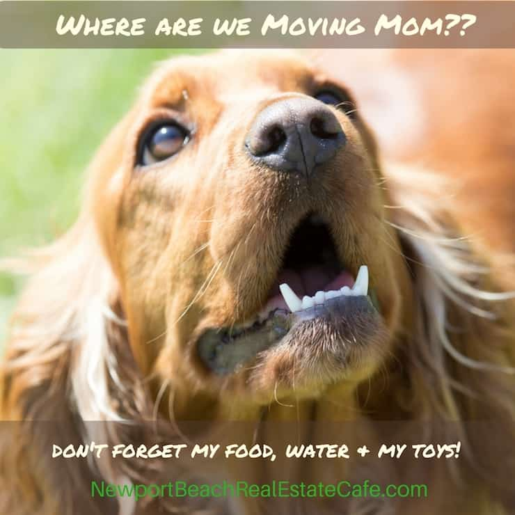 Relocating with pets in mind