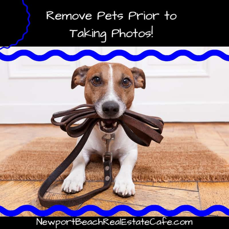 Remove pets prior to taking photos