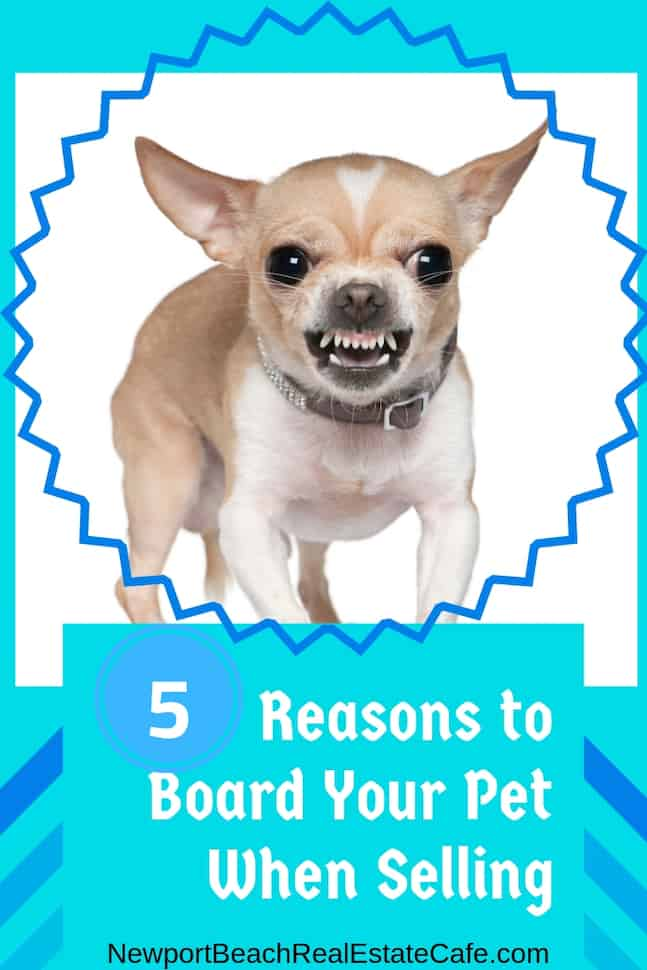 5 Reasons Why you Should Board your Pets When Selling!