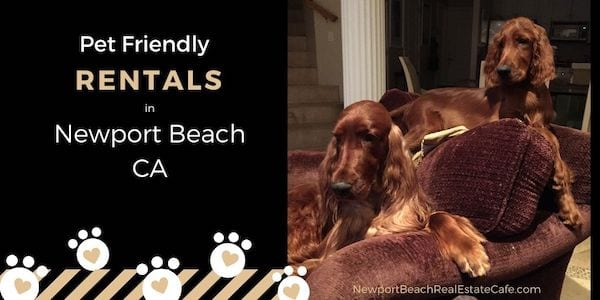 Pet Friendly Homes for lease in Newport Beach