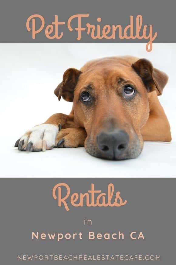 Pet Friendly rentals in Newport Beach CA