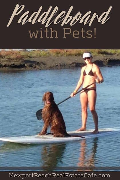 Paddleboard with Pets